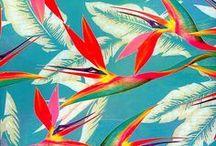 Pattern; Tropic frenzy