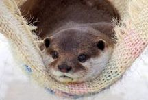 Otters Are My Favorite