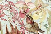 botanical art / a collection of botanical art, historic to contemporary.