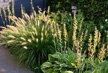 Kwaliteitstuinen / Diverse natuurlijke tuinen ontworpen en beplant door Kwaliteitstuin