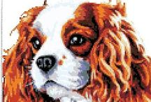 CAVALIER KING CHARLES SPANIELS / by Lecia Shockley