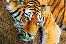 Beautiful World | Animals
