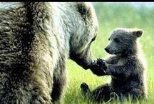 medvědí rodina