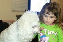 Poodles & Other Lovely Animals!!! :-)  / Poodles and other Lovely Animals. / by Pam DeLand