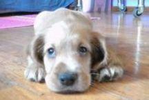 Cuccioli e animali / I nostri migliori amici