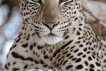 Amazing animals  / by Gayland Carroll