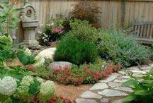 Landscaping / Home landscape ideas.