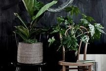 Plants / My dream plants (some that I own, some that I wanna own) and ideas for containers, pots, hanging etc.