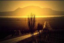 Vinice (Vineyards) / Vinice a vinohrady, kterými jsme při našich cestách prošli.