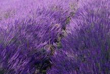 paars de kleur van lavendel
