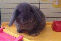 Bunny / Orecchie+musino a cuore+pon pon