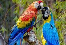 ! Birds !