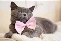 Cats!! / I love cats!