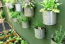 Tiny House Gardening  / This gardening board is a collaboration of ideas focused towards living in a tiny house.  Gardening boards revolving around health and family involvement.