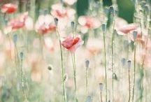 Pour les Fleurs