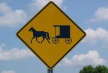 All Things Amish / by dali castillo