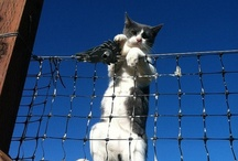 Mouser Cat