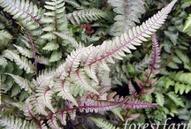 Oh The Painted Ferns!