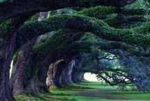 Green goddesses and gods of our earth / The beauty and magic of trees, forests and plants in general