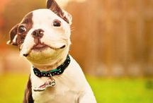 Puppies / Dog photography ideas / photos of cute puppies, photography tips, how to photo moving animals etc...