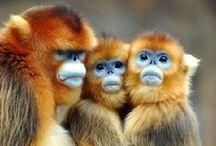 Animal Kingdom / Fierce, humorous, precious & awe-inspiring creatures of the animal kingdom.