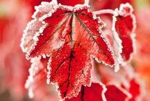 Fall & Winter / Fall & Winter bring the changing of the seasons, dazzling colors in nature and amazing animal migrations. Hearty foods and days of baking, snow-capped mountains, winter sports, family holidays, cold weather & warm hearths, down jackets & duvets and the ringing in of a new year!