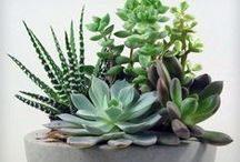 Decor | Plants + Nature / Ideas for plants and planters. Decorating your home with indoor plants and decorating outdoor spaces and balconies with drought friendly plants.