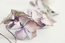 ~FLOWERS~ / joy....... / by ethereallune