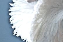 angels &beautiful priestesses