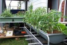 Gardening: DIY aquaponics