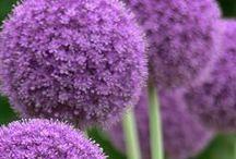 Love Flowers / Voici une petite sélection de magnifiques fleurs !