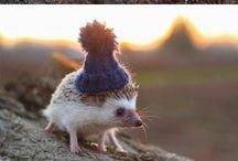 Irresistible pins / Obligatory board of cute animals