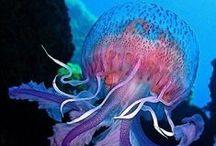 Aquatic / Under the sea