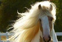 Horses<3 / O o plemene koňov ktoré milujem <3