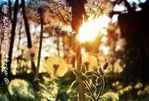 Nature Photography / Inspiration