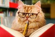 Animals + Books = Awesome / What do you get when you combine animals with books? Crazy cuteness, that's what!