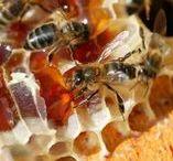 tableaux sur les abeilles