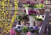 Rund um Blumen und Pflanzen
