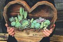 GARDEN | Succulents / planting succulents, garden succulent ideas, tips on how to grow succulents, creating succulent wall gardens, DIY succulent containers / how to colour dye succulents / by Anthi Leoni
