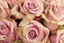 Blooms & berries / Blooms for bouquets, posies & hand ties