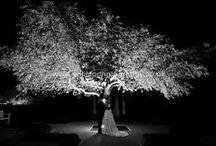 Weddings at Froyle Park / Beautiful weddings at Froyle Park