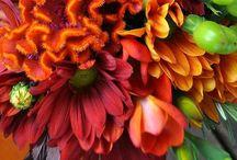 """Colour """"Natures' Masterpiece"""""""