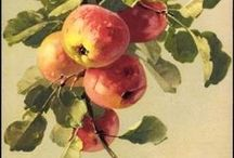 Botanical art / Botanical art, Fruit Decor, Fruit Art Print, Botanical print