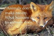 Animals / by A w Fitzgerald