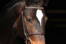 Horses & Pony 2014 / Horses & Pony 2014