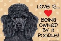 Poodle Paraphernalia / Poodle stuff / by A w Fitzgerald