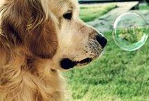 cute animals / köpekler