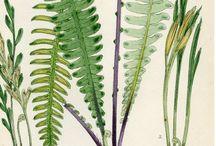 Botanicals / Ferns and florals