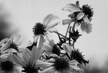 Monochrome / Fotografías en blanco y negro tomadas por mi :)