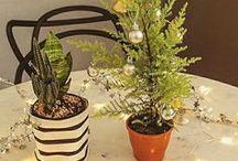 Natal | Christmas / Ideias e inspirações para o Natal - DIY, decoração, mesa posta, presentes e lugares.  #decorarcomcharme #blogdedecoração #decorblog #decor #decoração #design #natal #rena #papainoel #chamuca #diy #presente #christmas  Olá, agradecemos a sua visita, se você pinar e seguir nossas inspirações vai ficar melhor e se compartilhar vai ser top!  Veja + Inspirações e Dicas de decoração no blog! www.decorarcomcharme.com.br
